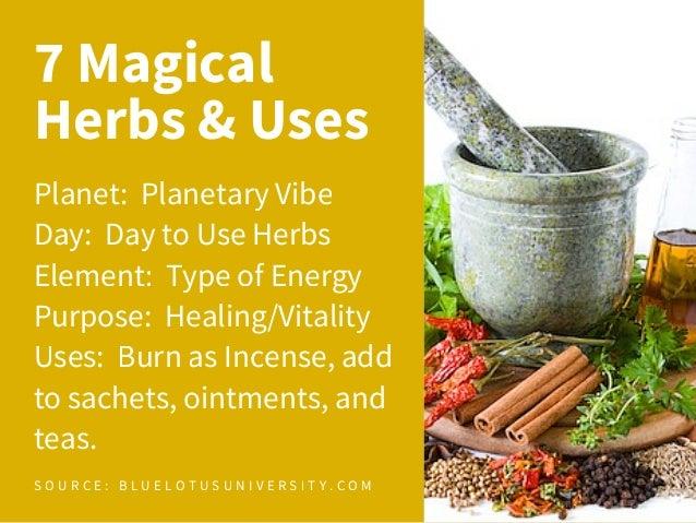 7 Magical Herbs & Their Uses