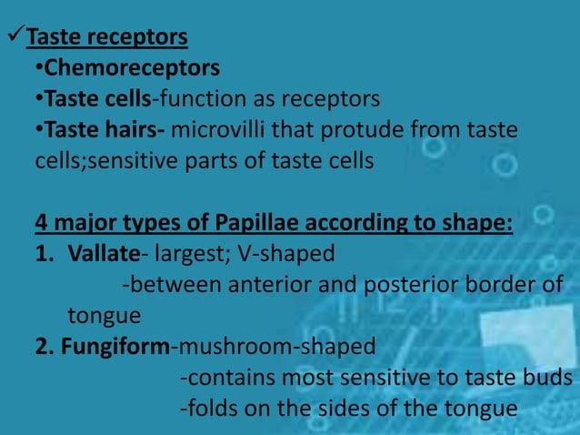 Taste receptors •Chemoreceptors •Taste cells-function as receptors •Taste hairs- microvilli that protude from taste cells...