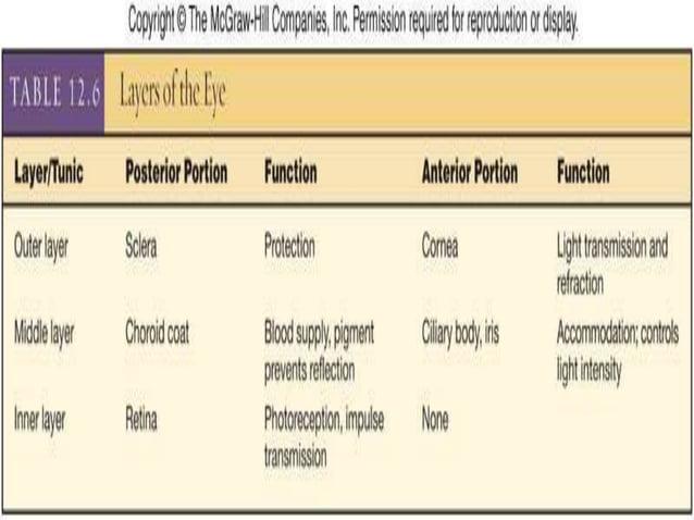 •LAYERS/TUNICS: 1. Outer Fibrous Tunis Sclera Cornea 2. Middle/Vascular Tunic Choroid Ciliary Body Iris 3.Inner Retina Co...