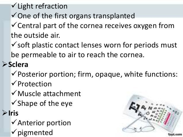 •Ciliary Body Anterior portion Pigmented Holds lens Moves lens for focusing Forms internal ring around front of eye ...