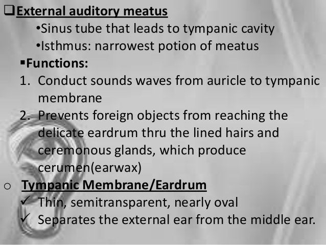 STEPS IN HEARING 1. The auricle collects sound waves that are then conducted through the external auditory meatus to the t...
