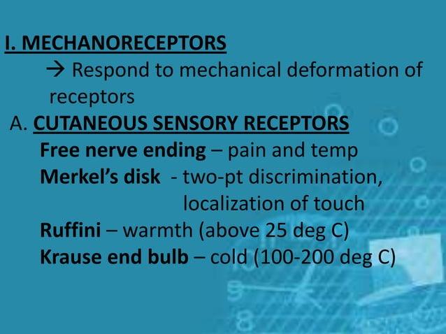 I. MECHANORECEPTORS  Respond to mechanical deformation of receptors A. CUTANEOUS SENSORY RECEPTORS Free nerve ending – pa...