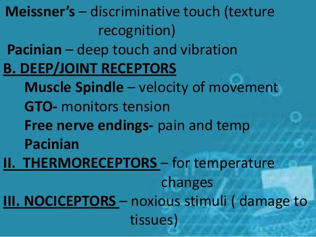 Meissner's – discriminative touch (texture recognition) Pacinian – deep touch and vibration B. DEEP/JOINT RECEPTORS Muscle...