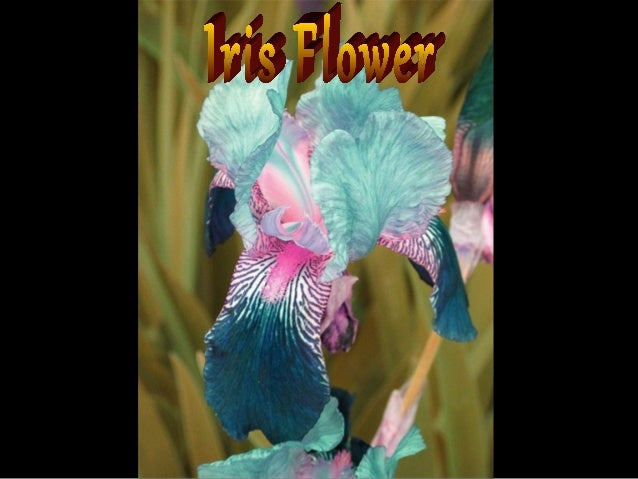 Special flowers ildy new pps