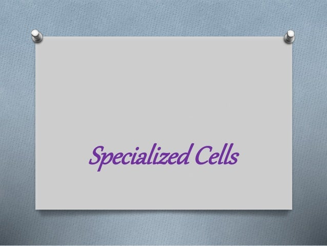 specialized cells storyboard by oliversmith