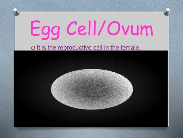 specialised cells in human biology Quizzes science  biology  cell  cell part and function  cell structure and specialised cells  cell  the structure of plant cells a.