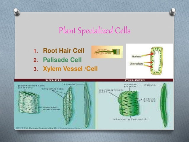 chpt 9 from cell to organism focus on plants how do