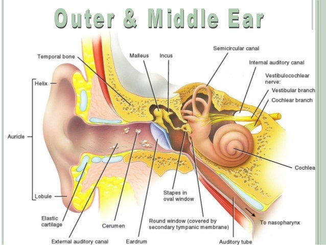the auditory sense Related wordssynonymslegend: switch to new thesaurus noun 1 auditory sensation - the subjective sensation of hearing something he strained to hear the faint sounds sound aesthesis.