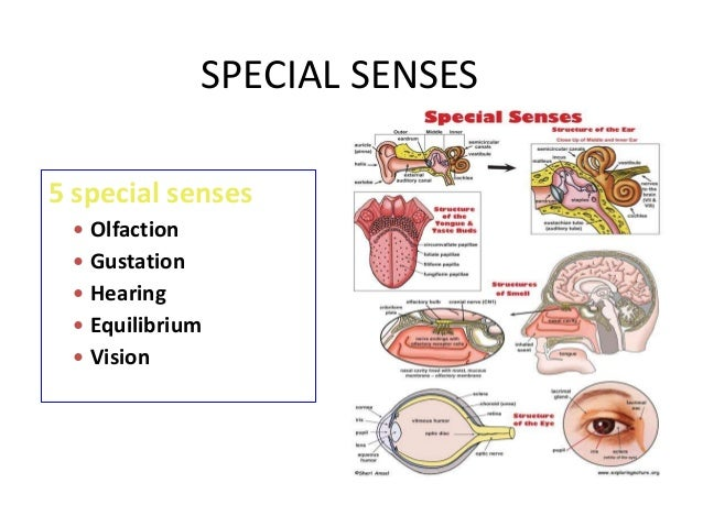 Special Senses 53829485 on pain receptors body diagram