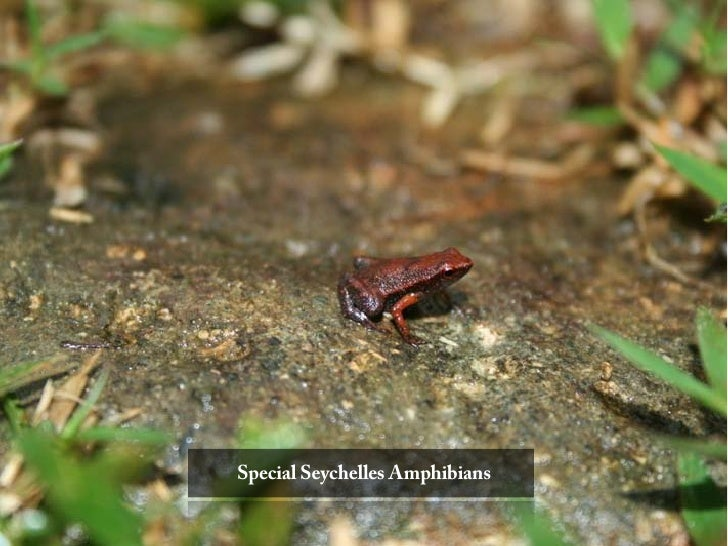 Special Seychelles Amphibians