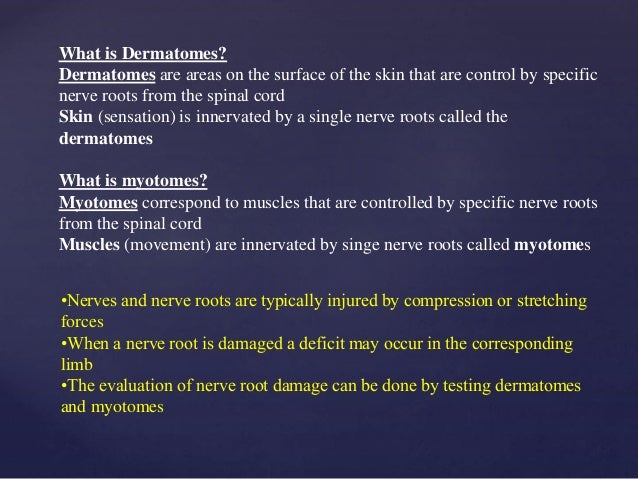 What is Dermatomes? Dermatomes are areas on the surface of the skin that are control by specific nerve roots from the spin...
