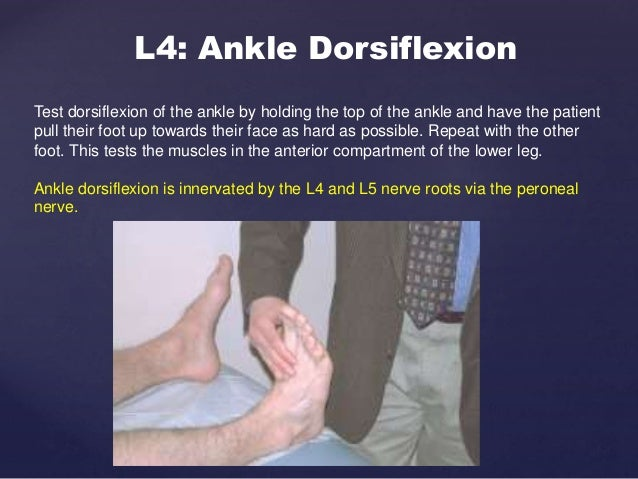 """S1&s2: Ankle plantar flexion and eversion/knee flexion Holding the bottom of the foot, ask the patient to """"press down on t..."""