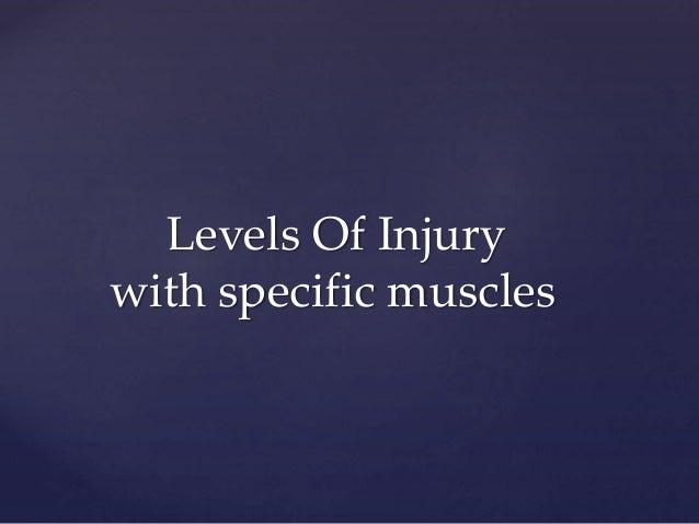 L1 to S5 Lower Limb Muscles L1/2 Hip Flexors L3 Knee Extensors L4 Ankle Dorsiflexors L5 Long Toe Extensors S1/2 Ankle Plan...