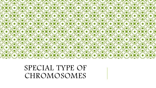 SPECIAL TYPE OF CHROMOSOMES