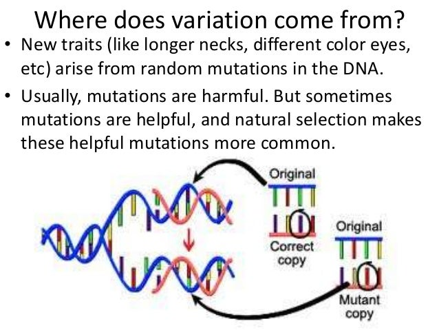 What Causes Natural Selection To Go To Speciation