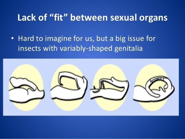 """Lack of """"fit"""" between sexual organs • Hard to imagine for us, but a big issue for insects with variably-shaped genitalia"""