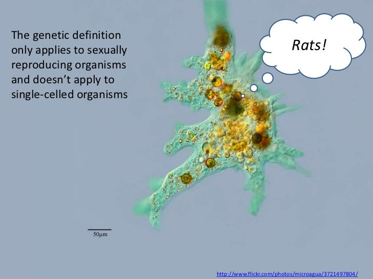 The genetic definitiononly applies to sexually                             Rats!reproducing organismsand doesn't apply tos...