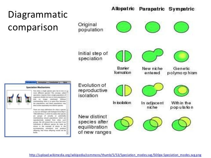 Diagrammaticcomparison    http://upload.wikimedia.org/wikipedia/commons/thumb/5/53/Speciation_modes.svg/500px-Speciation_m...