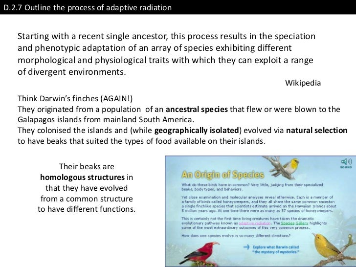 D.2.7 Outline the process of adaptive radiation   Starting with a recent single ancestor, this process results in the spec...
