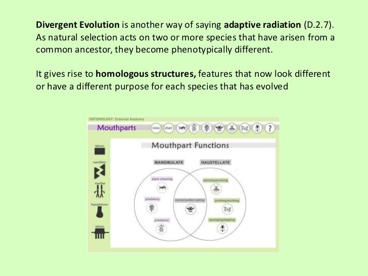 Divergent Evolution is another way of saying adaptive radiation (D.2.7).As natural selection acts on two or more species t...
