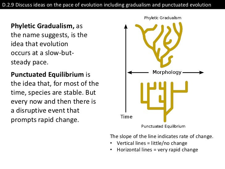 D.2.9 Discuss ideas on the pace of evolution including gradualism and punctuated evolution   Phyletic Gradualism, as   the...