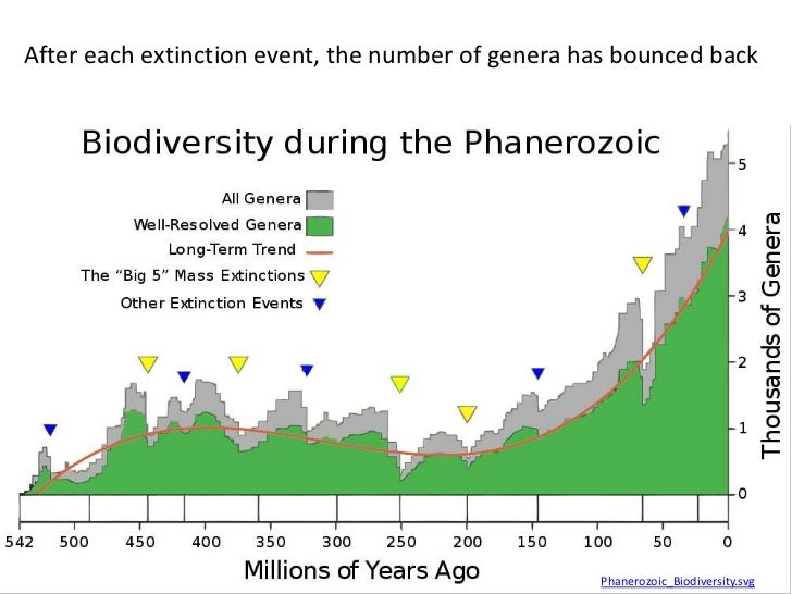 After each extinction event, the number of genera has bounced back                                                   Phane...
