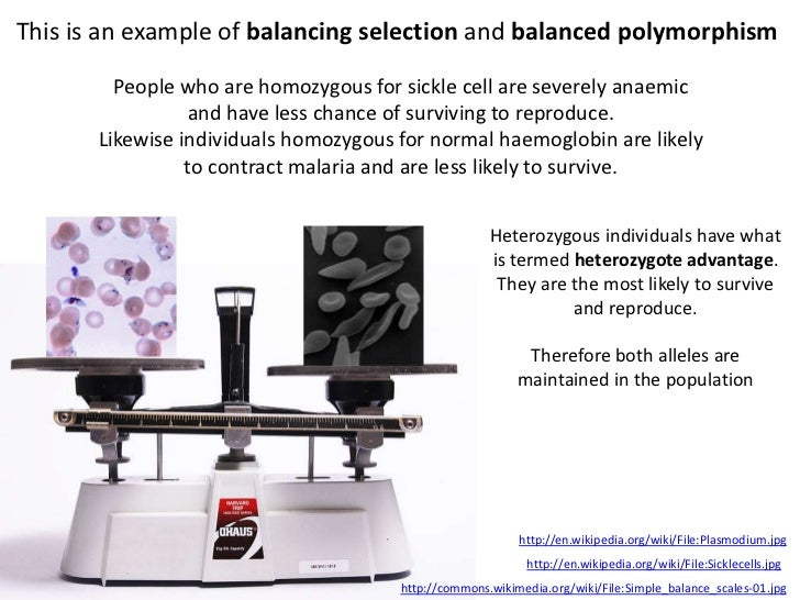 This is an example of balancing selection and balanced polymorphism         People who are homozygous for sickle cell are ...