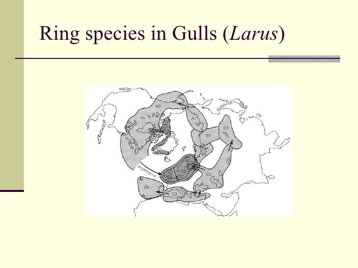 Species concepts and speciation ensatina salamanders 42 ring species ccuart Choice Image