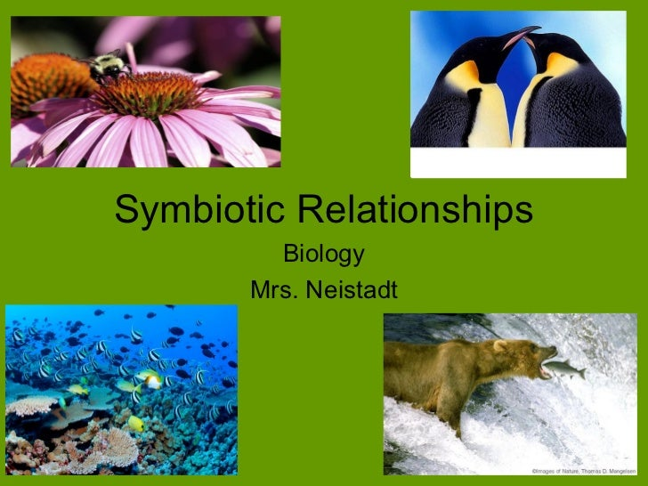 symbiotic relationship in plants and animals