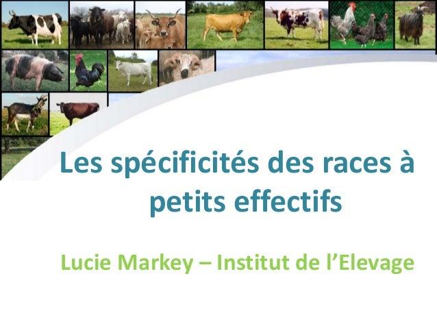 Les spécificités des races à petits effectifs Lucie Markey – Institut de l'Elevage