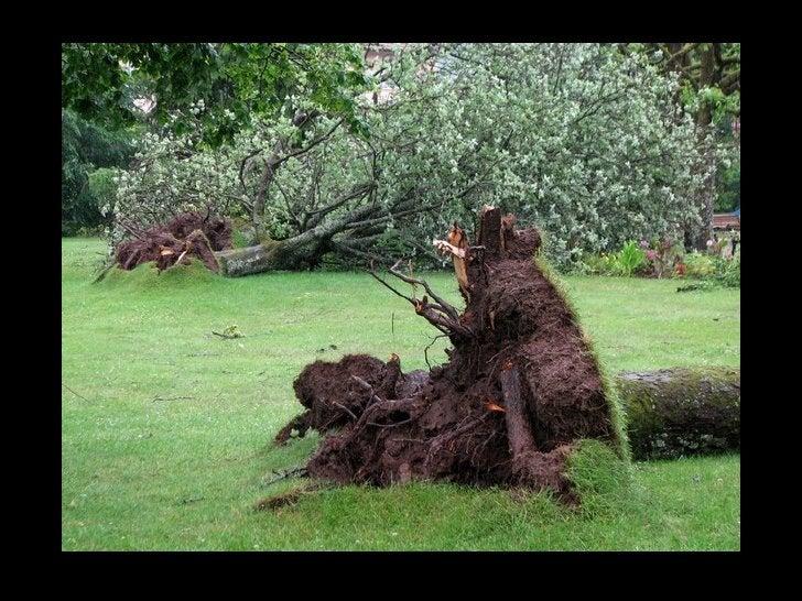 Des kilomètres de câbles à terre, des tuiles et toits envolés, des centaines d'arbres     arrachés, bravo à tous les agent...