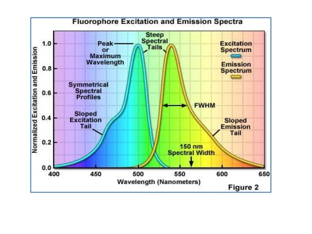 What can specrofluorometer do? • It has been used for the direct or indirect quantitative and qualitative analysis by meas...