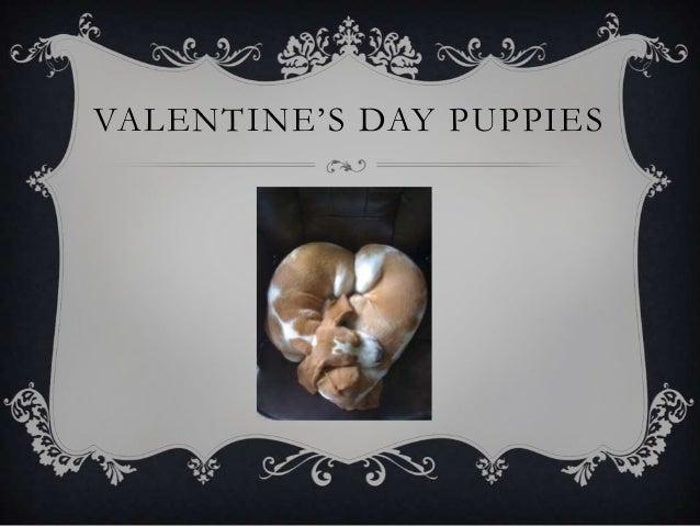 VALENTINE'S DAY PUPPIES