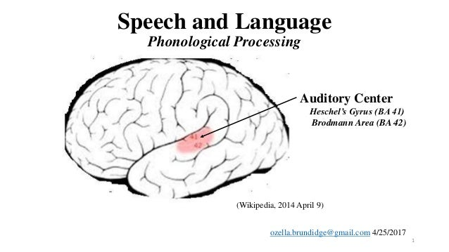 Speech and language phonological processing