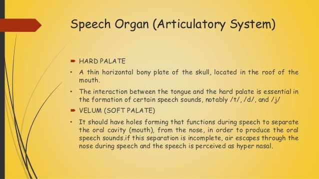 Speech Organ (Articulatory System)  HARD PALATE • A thin horizontal bony plate of the skull, located in the roof of the...
