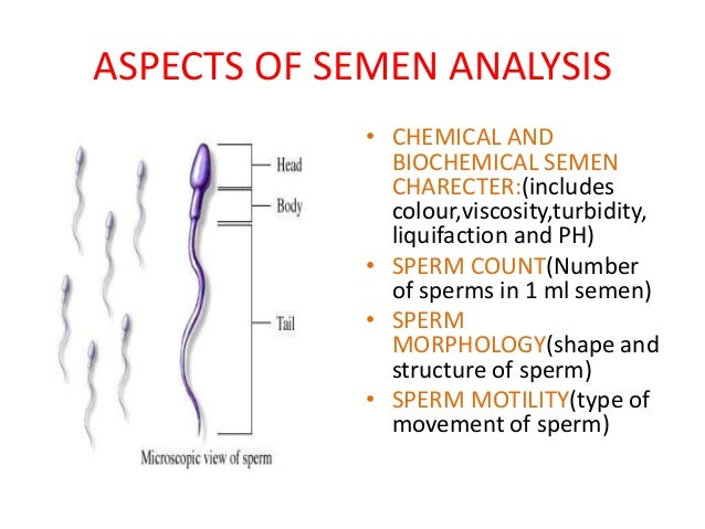 Sperm anatomy and physiology