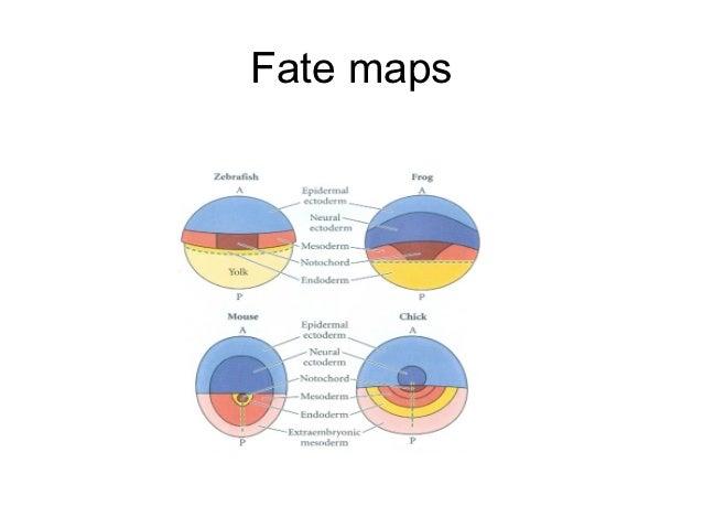 Fate maps