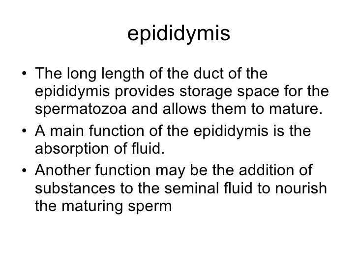 Another function of sperm 5