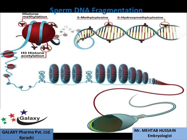 Sperm chromatin structure assay (SCSA): a tool in diagnosis and treatment of infertility