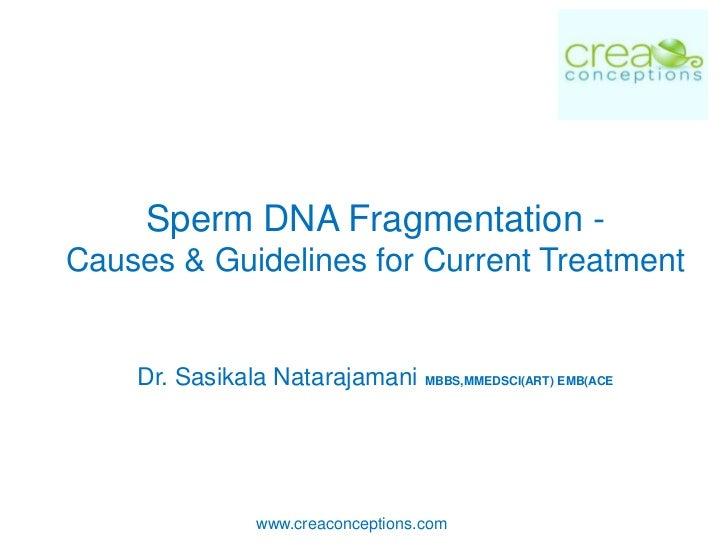 Sperm DNA Fragmentation -Causes & Guidelines for Current Treatment    Dr. Sasikala Natarajamani MBBS,MMEDSCI(ART) EMB(ACE ...