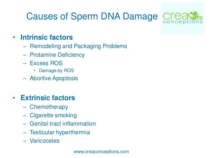 Drugs causing sperm dna damage, pron stars nuds