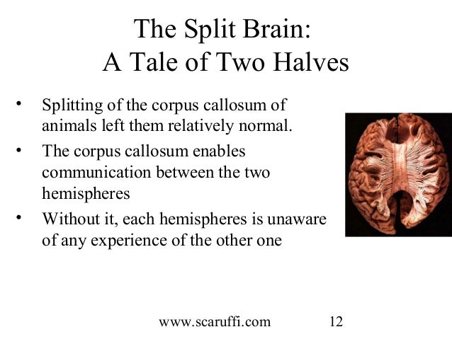 a splitting of the mind