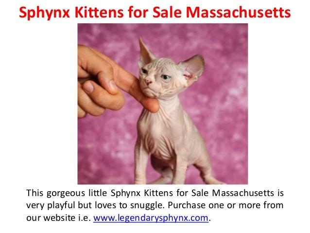 Carolina: Kittens Craigslist