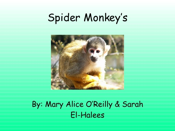 Spider Monkey's By: Mary Alice O'Reilly & Sarah El-Halees