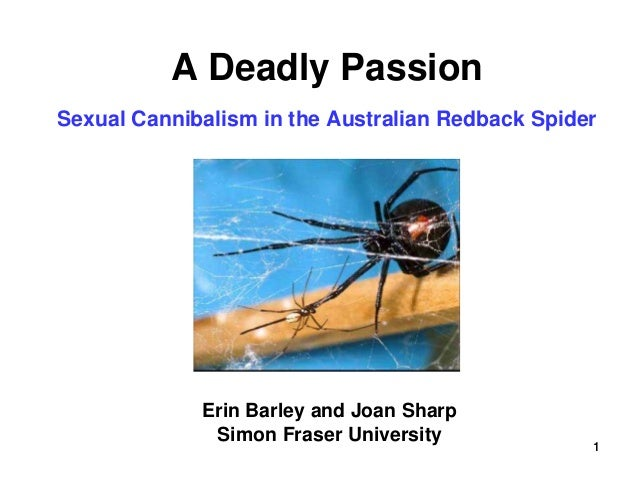1 A Deadly Passion Sexual Cannibalism in the Australian Redback Spider Erin Barley and Joan Sharp Simon Fraser University 1