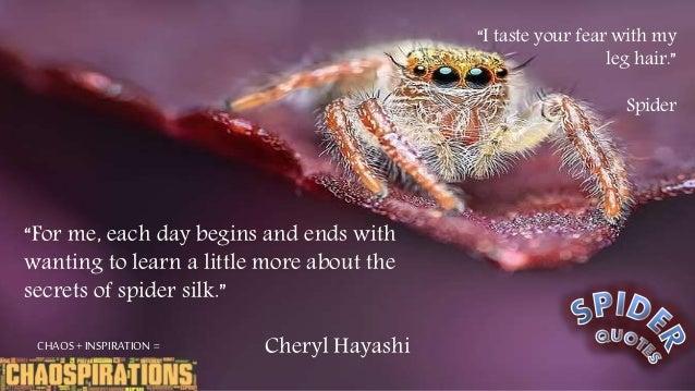 Spider Quotes Spider Quotes Spider Quotes