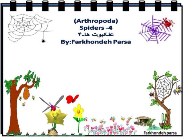 Spiders  4
