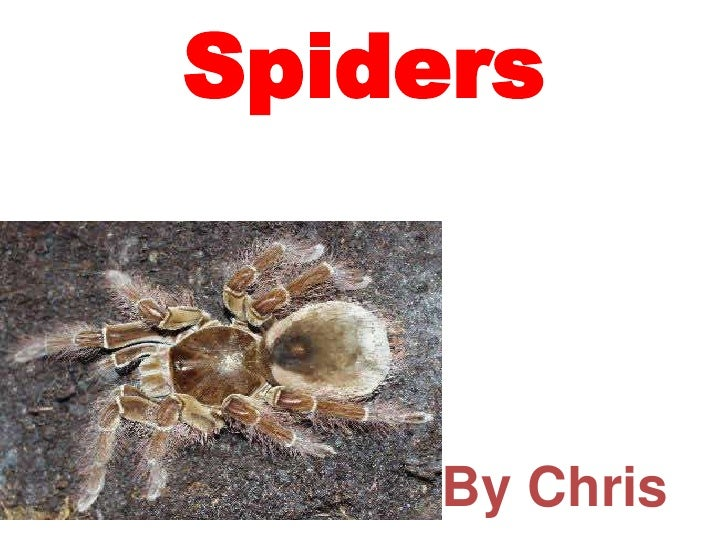 Spiders<br />By Chris<br />
