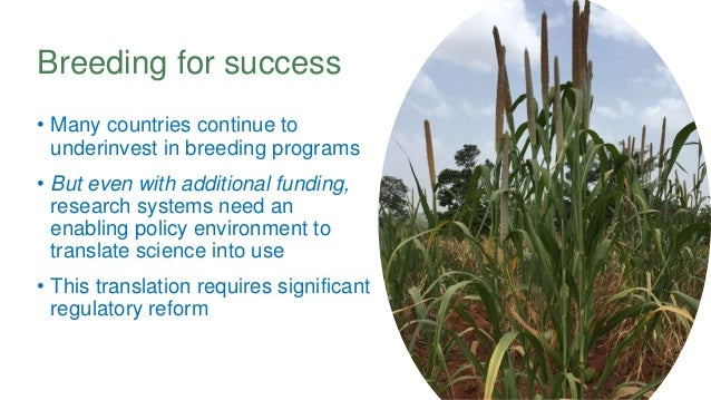 Breeding for success • Many countries continue to underinvest in breeding programs • But even with additional funding, res...