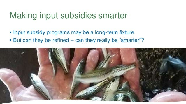 """• Input subsidy programs may be a long-term fixture • But can they be refined – can they really be """"smarter""""? Making input..."""